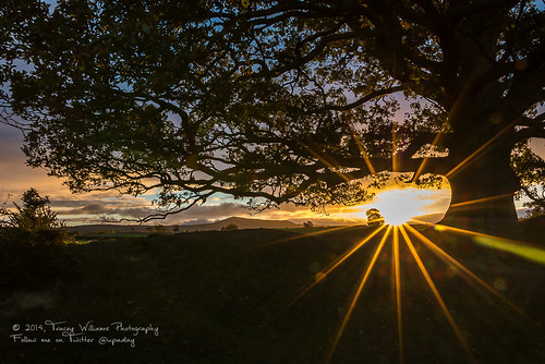 sun wales sunrise canon landscape photography skies branches scenic lensflare oaktree montgomeryshire offasdyke corndon welshborder shropshireborder