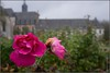 Rose and abbey backdrop