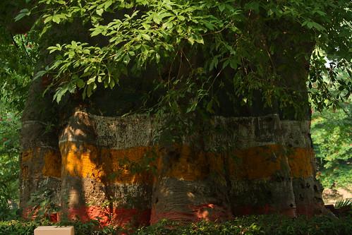 trees india zoo lucknow ind uttarpradesh