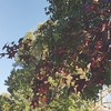 Found some hints of autumn on a walk today :maple_leaf: #vscocam