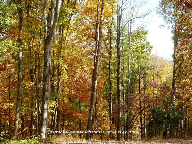 Fall Driveway 2014 5