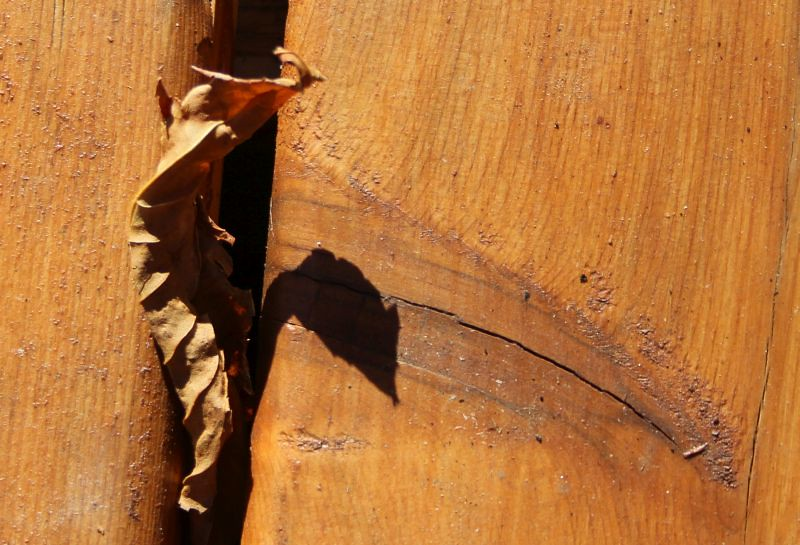 Cedar Wood = repels and kills termites
