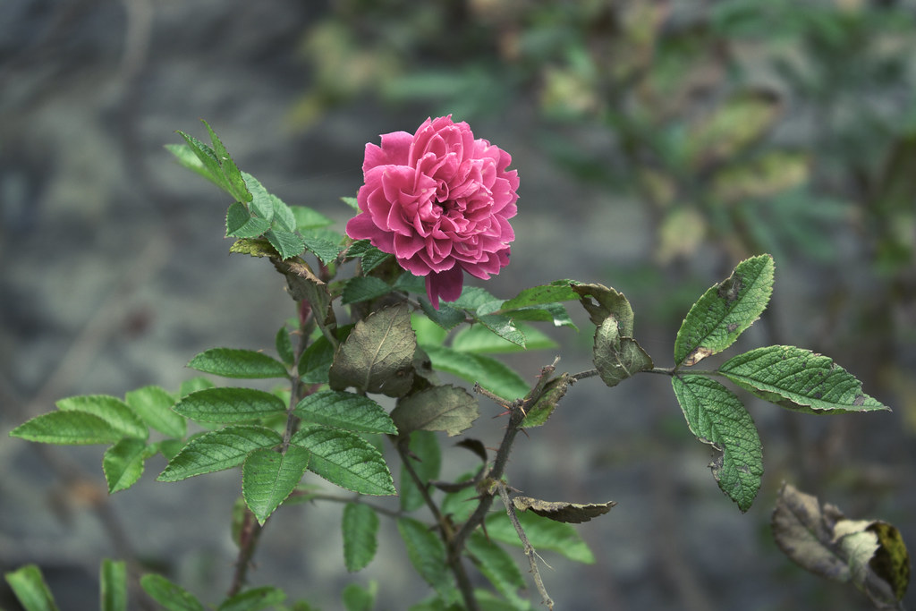 Flower 6.
