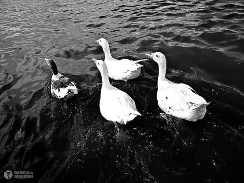Autor: Ivan Pawluk