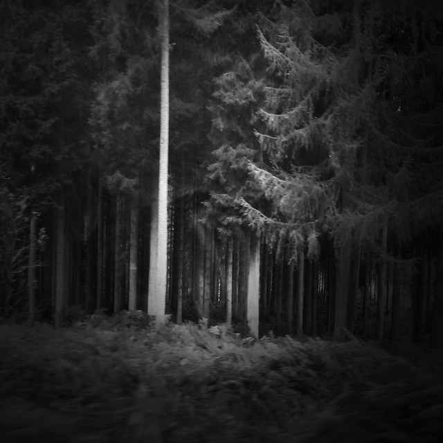 d i a n e p o w e r s - Dark Wood, Dark Water