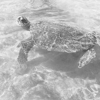 Turtle Sighting in Hawaii
