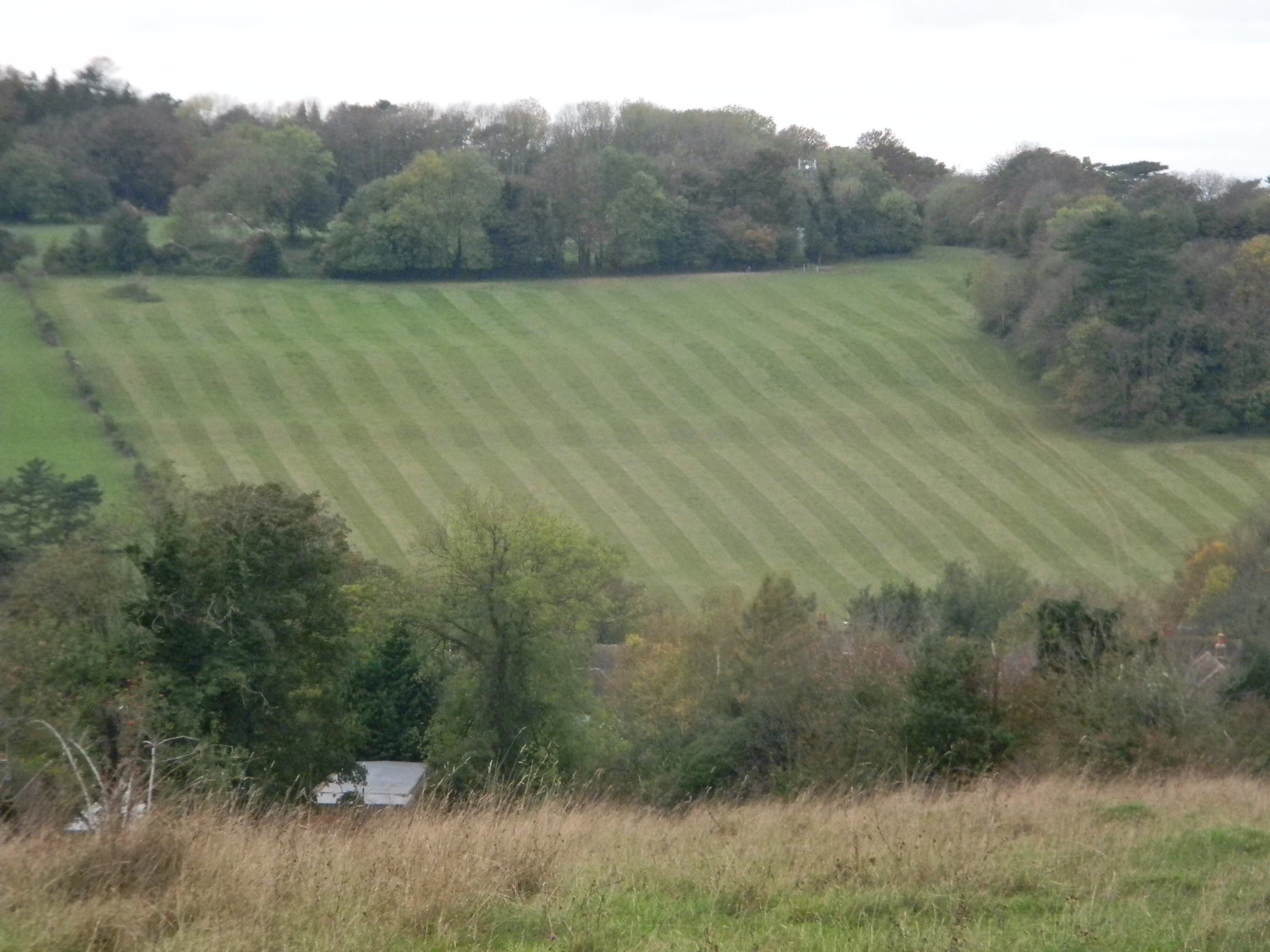 Stripey Field Riddlesdown to Coulsden South