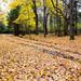 Autumn Lane by Iguanasan