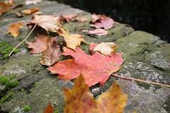 Herbstliches rund um Burg Linn