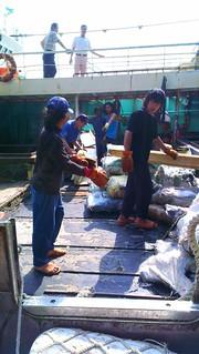 查獲魚翅證據。(圖片來源:台灣綠色和平組織)