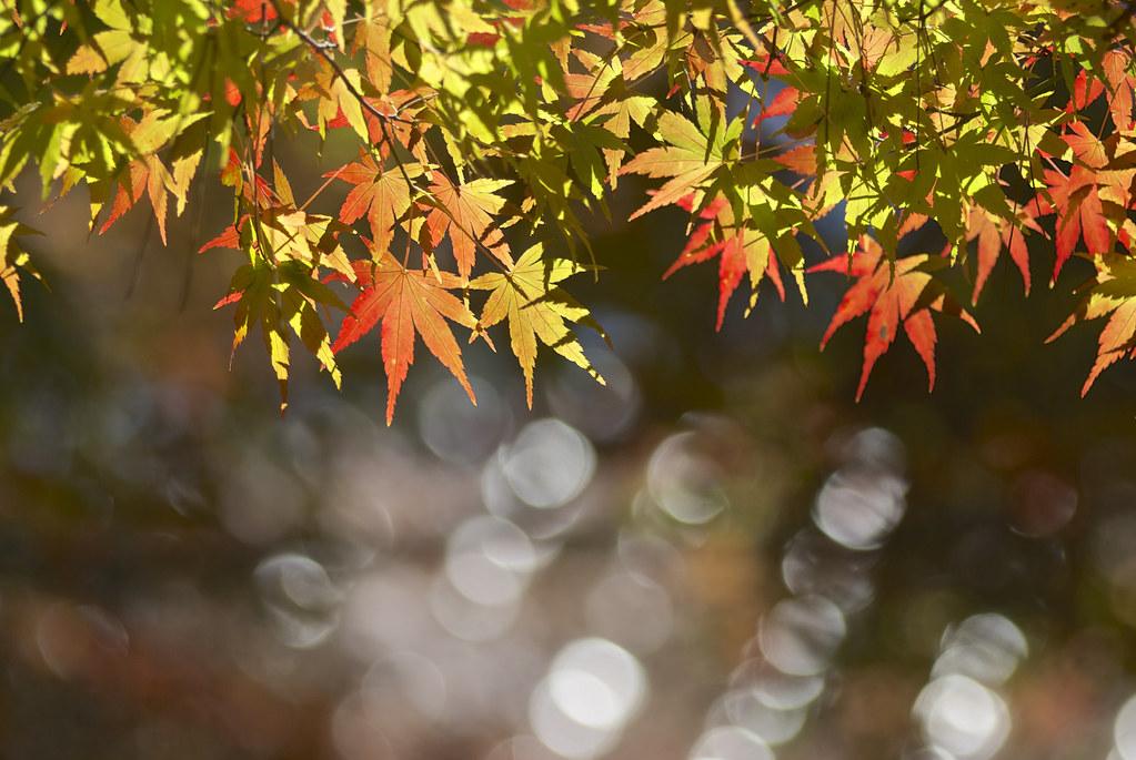武陵 福壽山農場的黃綠紅 [大量圖請慢看]