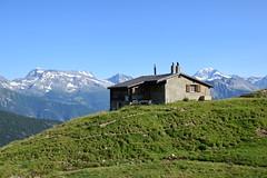 Swiss Alps    2015