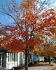 #Nelsonville #Ohio #AthensCountyOhio #ohiogram #ohioigers #ohioexplored #letsroamohio #Tree #FallColors
