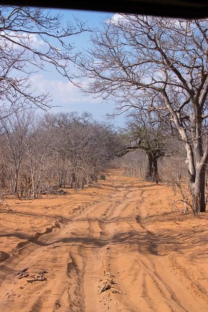 Safari roads
