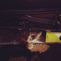 Sometimes we see Cosmo popping out from under the sofa. There is a heat vent he likes there.