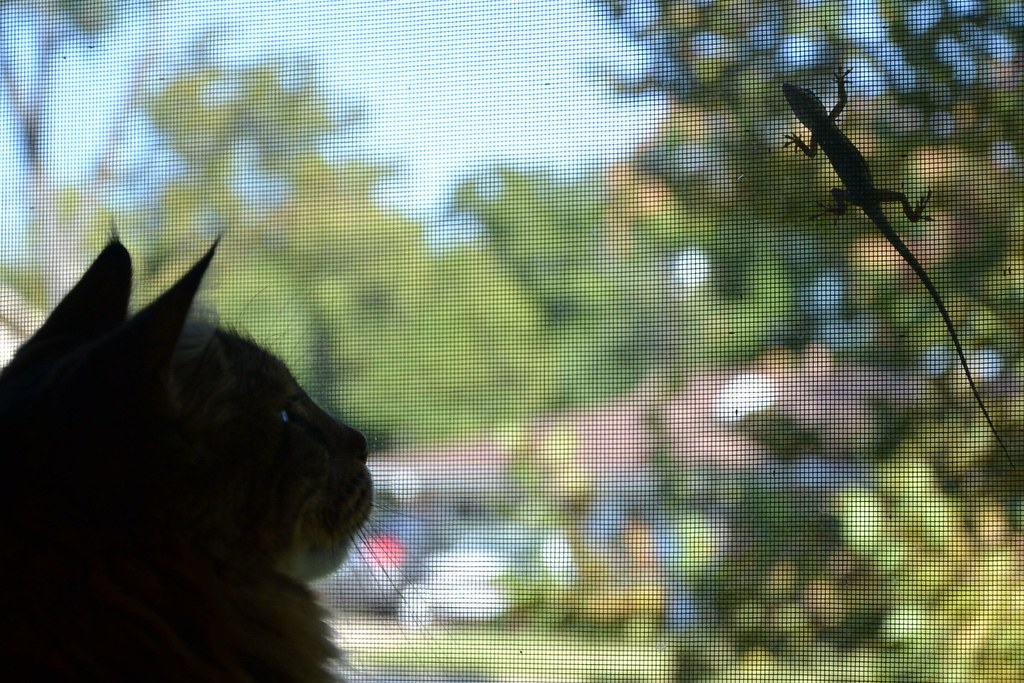 cat watches a lizard