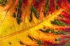 Herbst-Inferno by markus.j