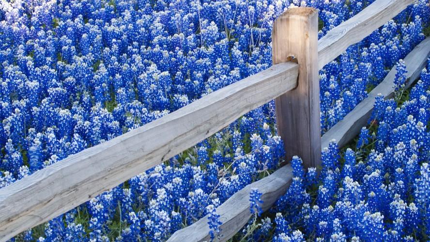 Flowers Desktop Wallpapers Free Download Flowers Desktop W