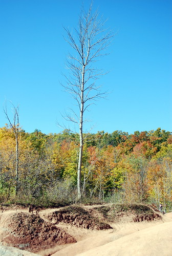 Cheltenham Badlands effect on tree life