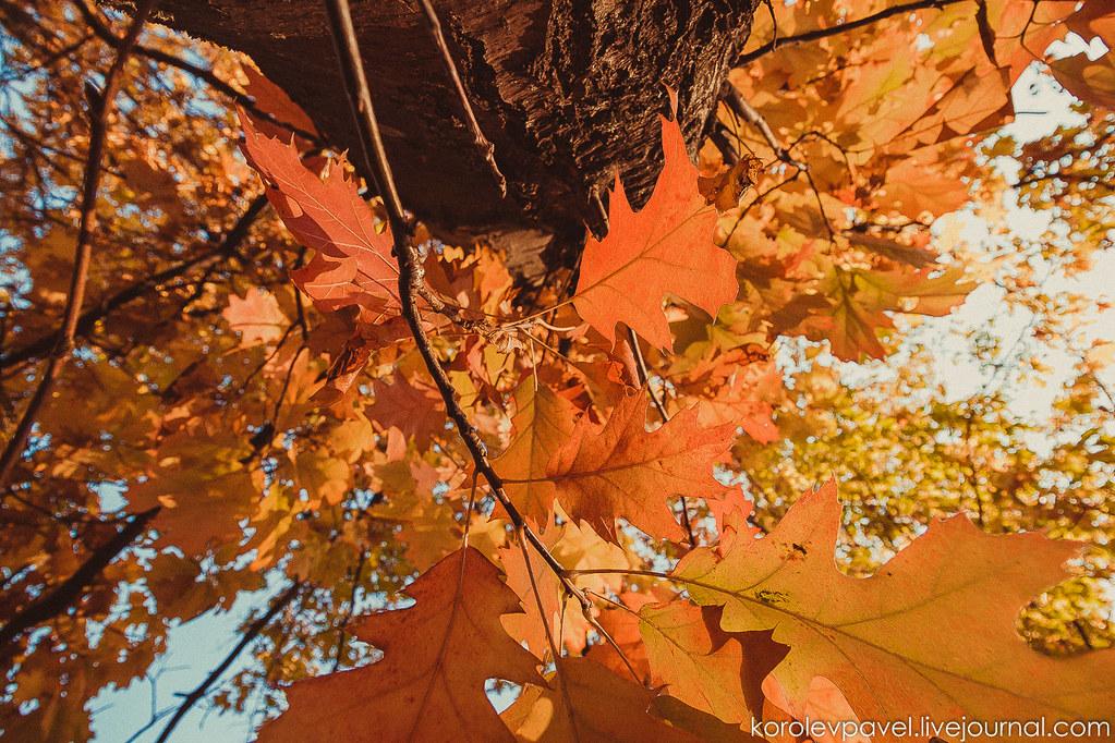 Autumn-147