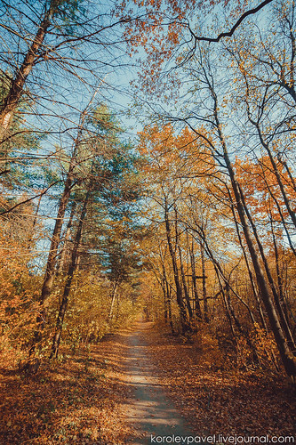 Autumn-047
