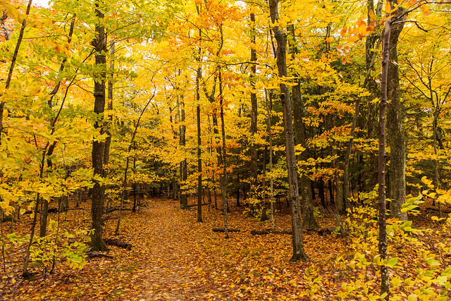 Fall Foliage at Peninsula State Park, Door County Wisconsin