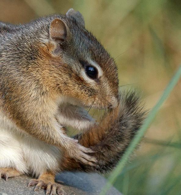 Squirrel Sex 40