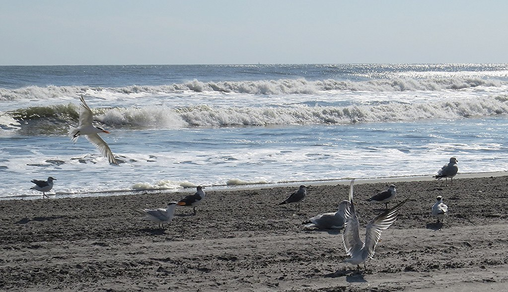 Seagulls on the beach in Atlantic City, NJ