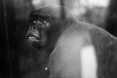 Thoughtful Animal 2