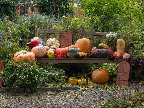 Herbstliche Fülle...