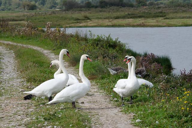 2014.09.11.001 PICARDIE - Vers le parc - rencontre au bord des étangs