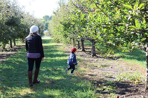 apple-picking 034