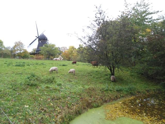 Molino y paisaje rural