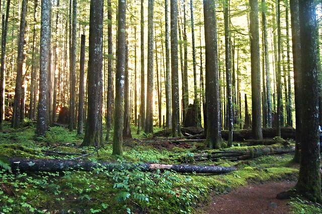 Evergreen Forest in Fall   Flickr - Photo Sharing!