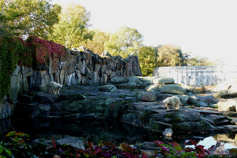 Berliner Zoo 13