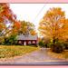 (111/365) Peak Fall Season / Meriden, CT...
