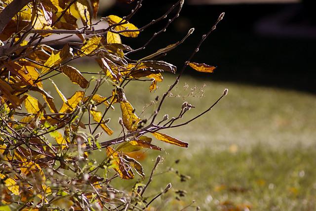 Last few leaves