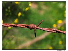 2014-05-30_Chasseradès-Bleymard-0028