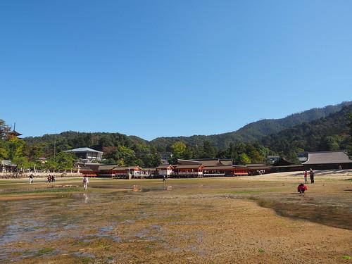 厳島神社 本殿