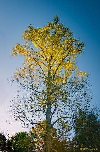 leaves yellow sunrise nikon unitedstates northcarolina shelby hdr lightroom photomatix