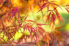 Feathery autumn