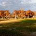 Autumn tree line at the Excelsior Commons by minnetonkafelix