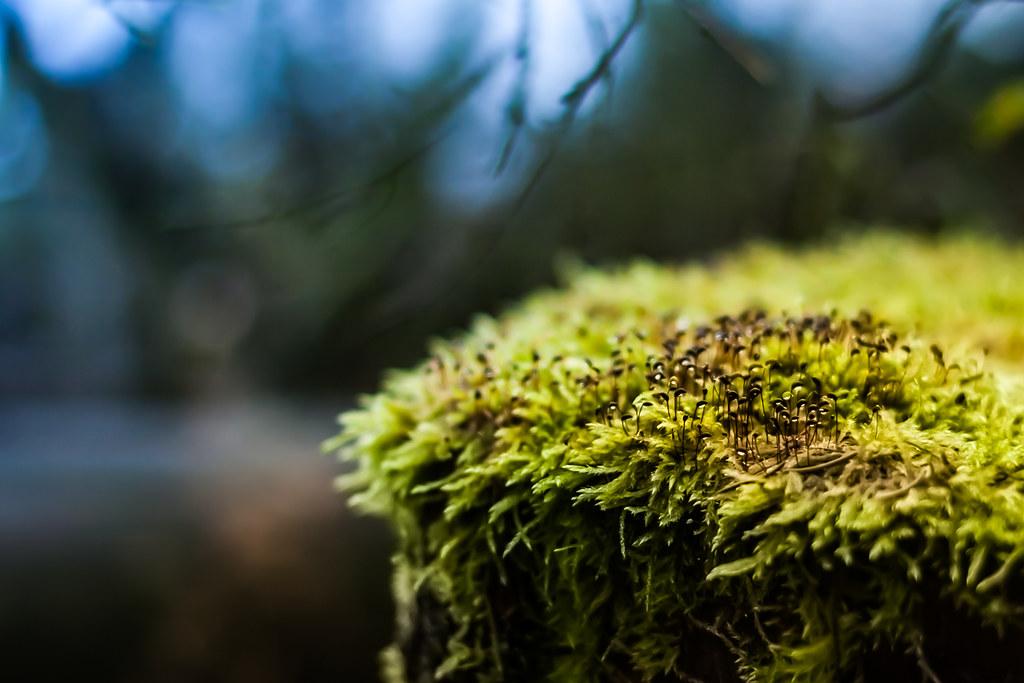 Little moss planet