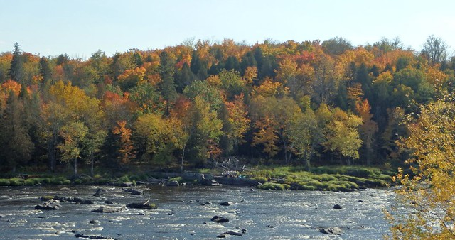 maple trees starting to turn behind the St. Louis River