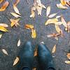 it's finally feeling like autumn