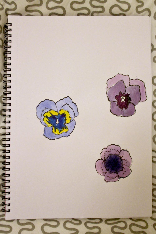 pansies illustration