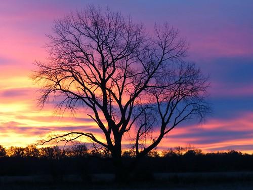 tree sunrise farm indiana wheatfield