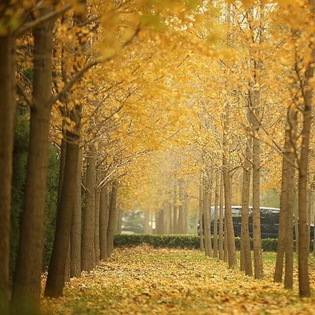 秋色·京城