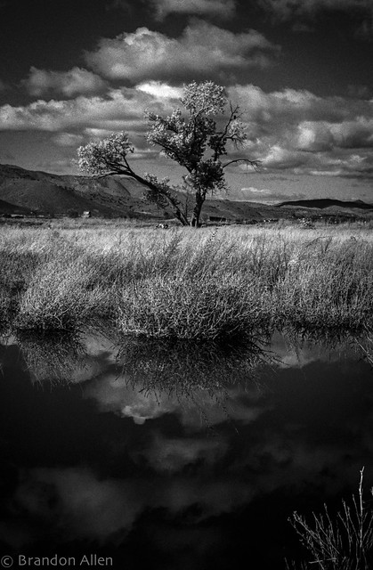 Tree and Marshes 2