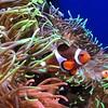I found Nemo